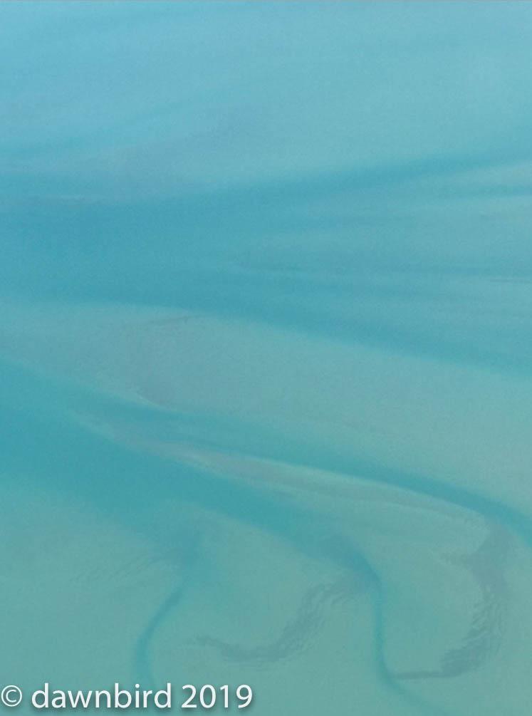 Blue of shark bay.jpg