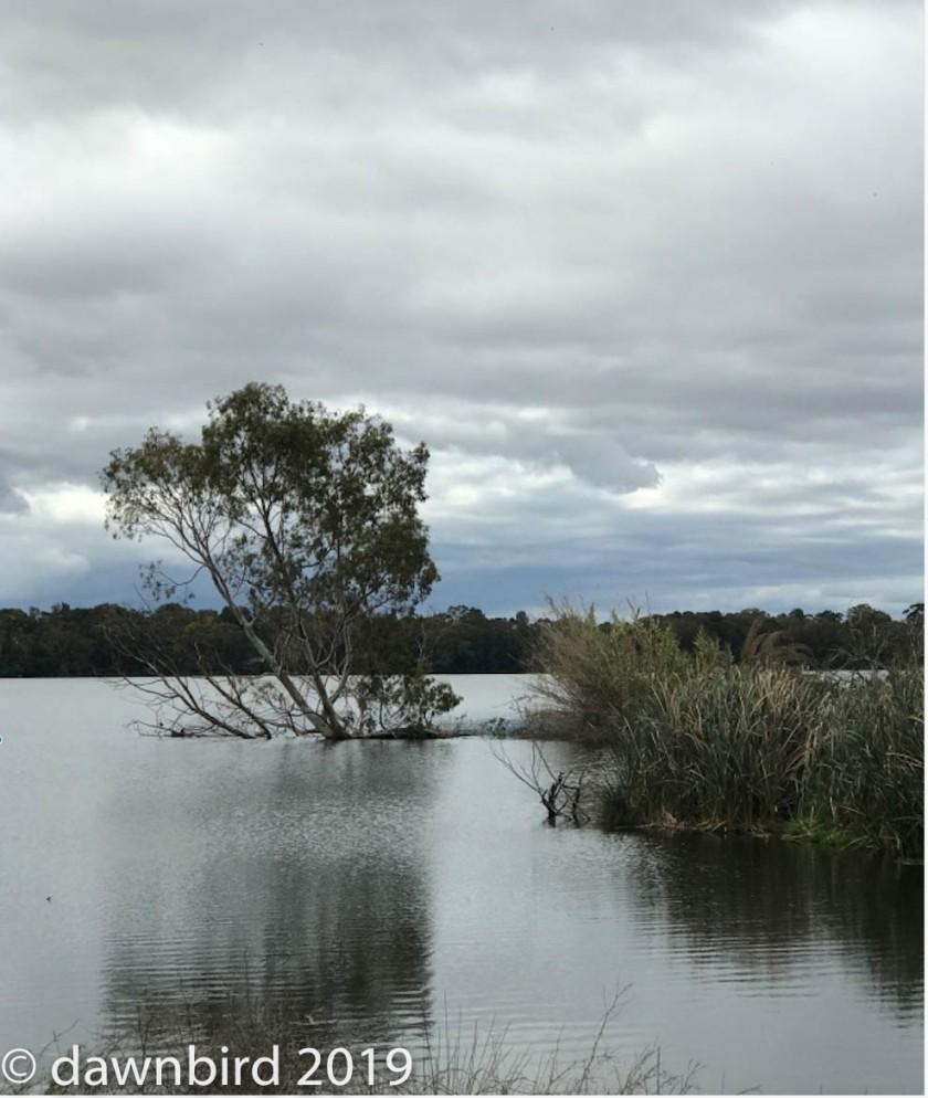 Lake Monger 1.jpg