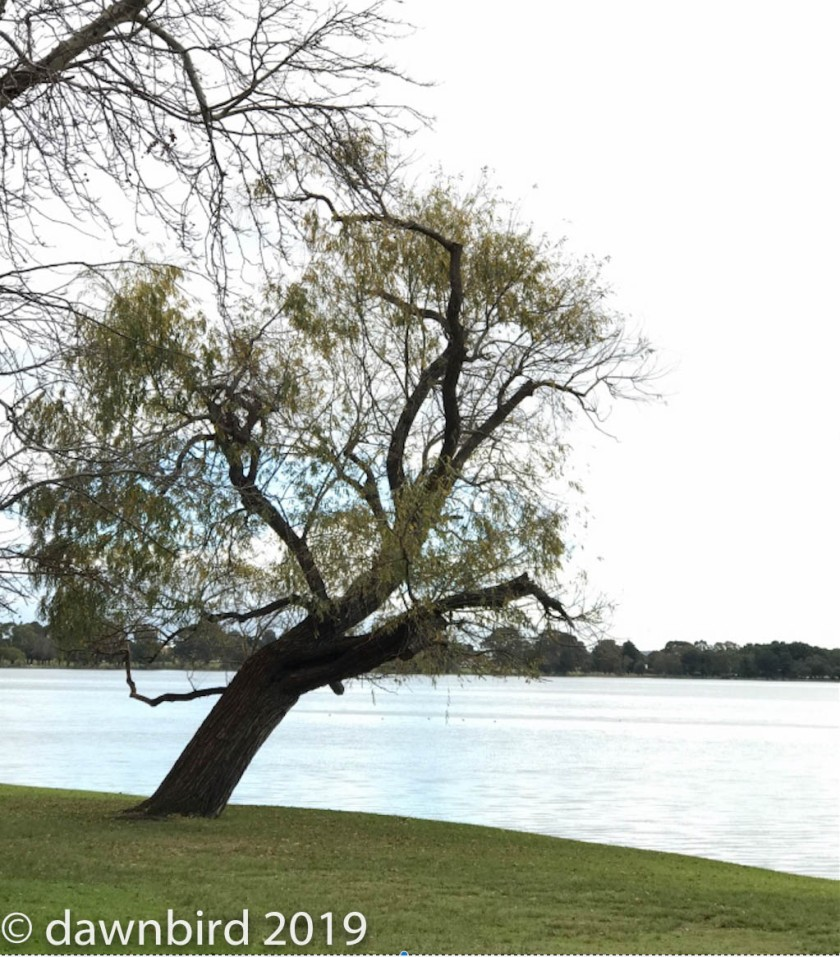 Lake Monger 2.jpg